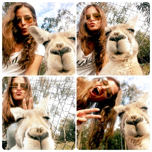 Kangaroo Selfie Compilation