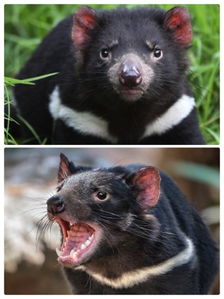 Tasmanian Devil Compilation